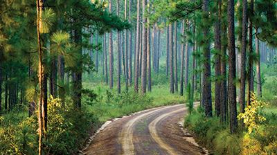 Longpine Road