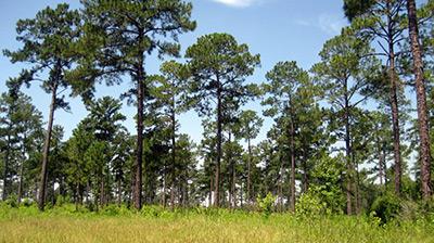 Red Hills Plantation