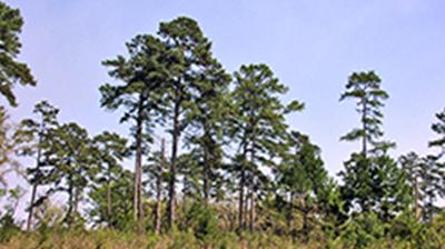 Miccosukee Hills Plantation