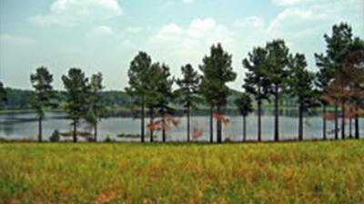 Wilson Lake Plantation