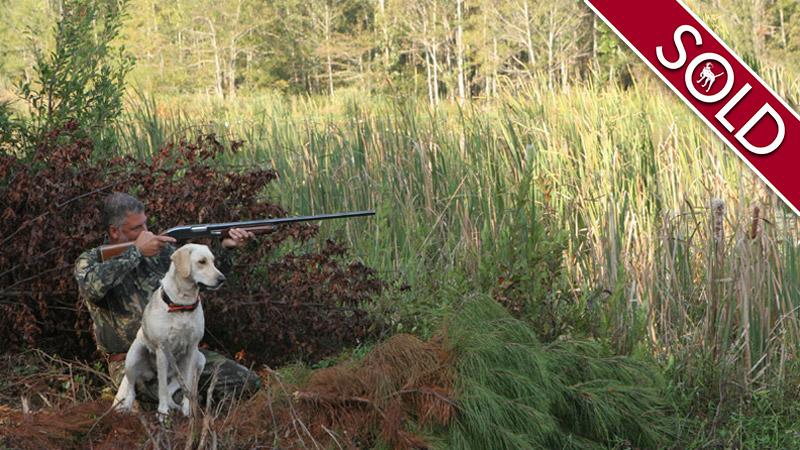 Man and dog hunting