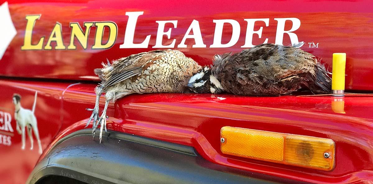 Kohler 2 quail lying on jeep